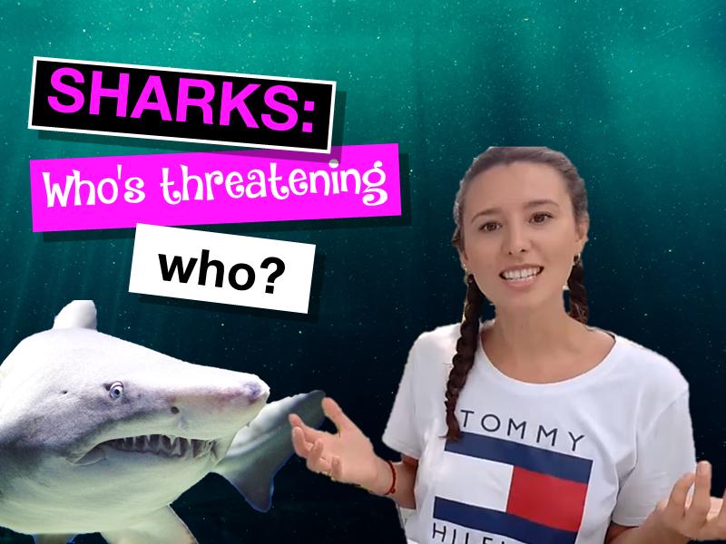 Sharks: Who's threatening who?