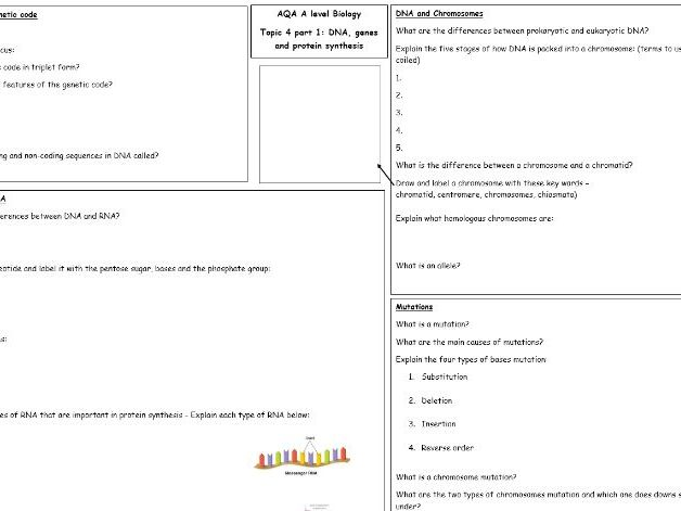 AQA A level Biology Topic 4 Part 1 revision: DNA, Protein Synthesis and Meiosis