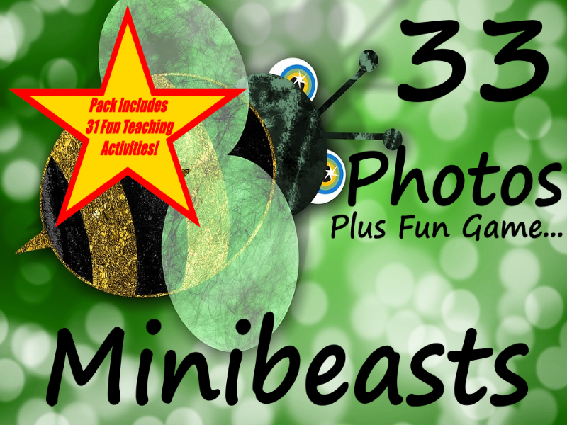 33 Minibeast Photos and a guess the minibeast game + 31 Fun Teaching Activities For These Cards