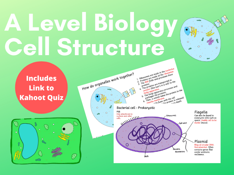 2.1 Cell Structure OCR A-Level Biology COMPLETE LESSON