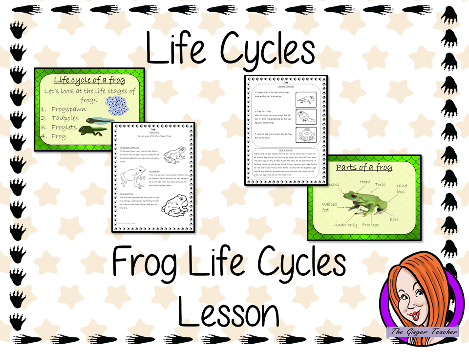 Frog  Life Cycles Complete Science Lesson