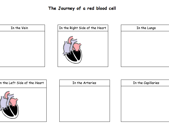 Red Blood Cell journey