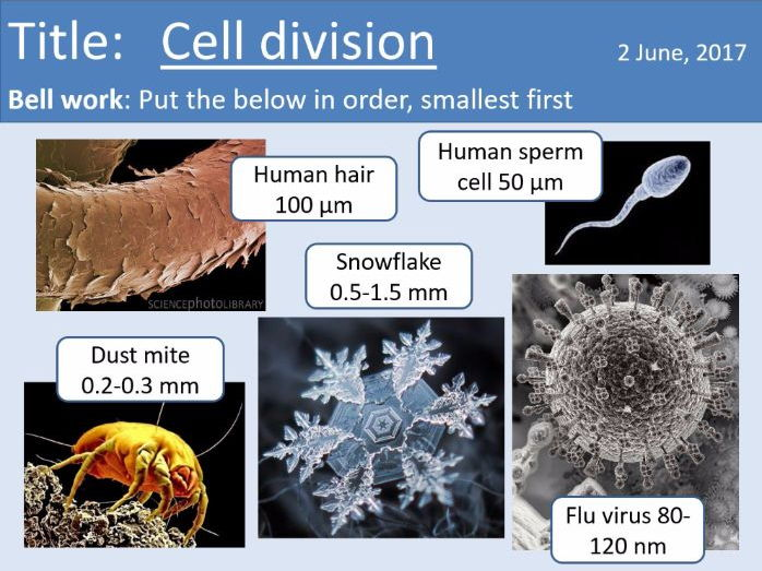 Year 7 Cells lesson 6 - Cell division