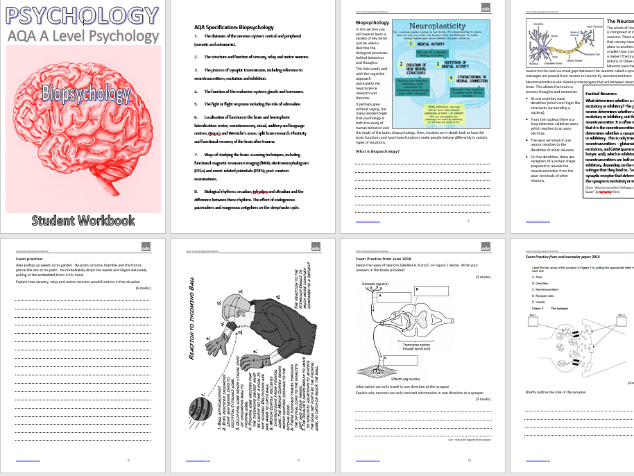 Biopsychology - Neurology & Brain Localisation  for A Level Psychology