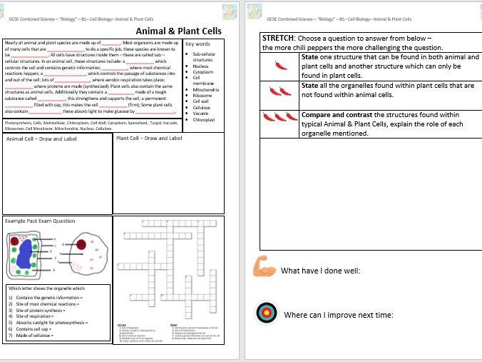 Animal & Plant Cells GCSE Classroom/Revision Worksheet