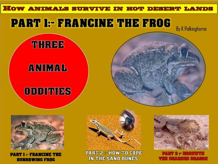 FRANCINE THE BURROWING FROG OF THE HOT DESERT - ANIMAL ODDITY PART 1