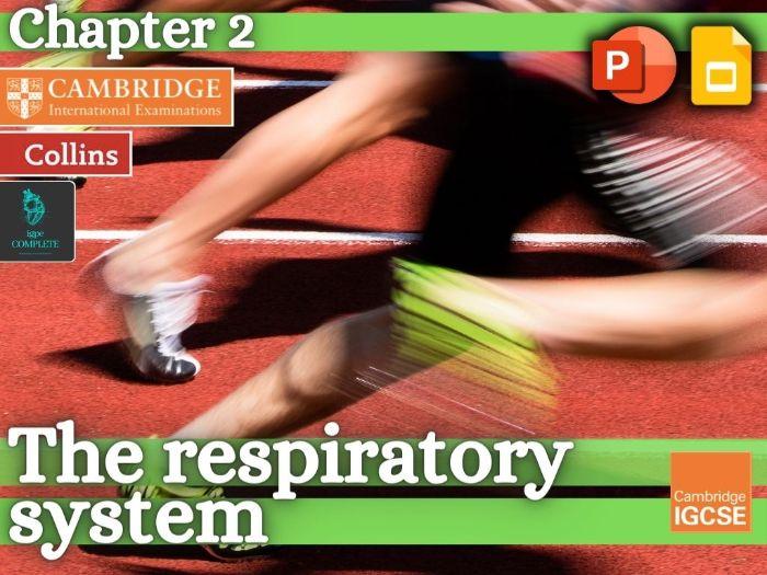 IGCSE / GCSE  PE - RESPIRATORY SYSTEM - Anatomy and Physiology - full teaching resource