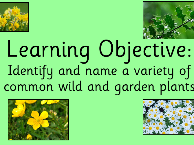 I can name and identify a variety of common wild and garden plants lesson