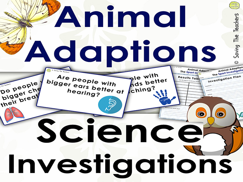 Animal Adaptions: Sports Investigation
