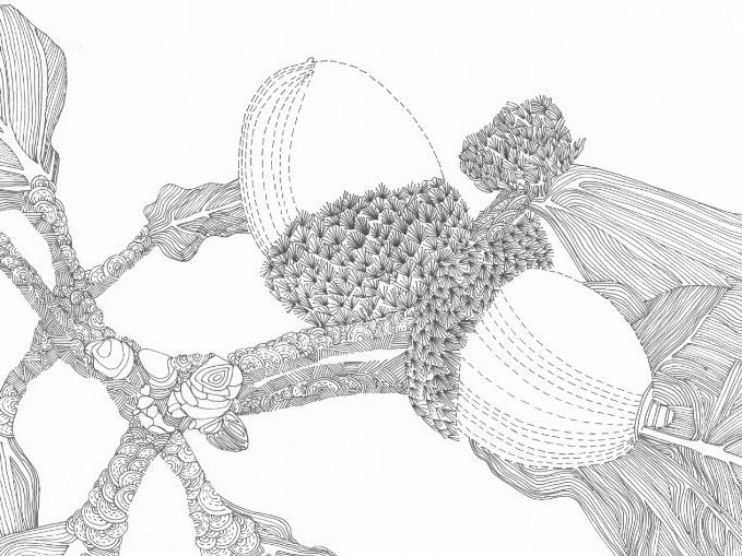 Acorns in an Oak Tree Colouring Page