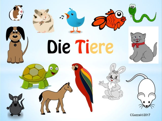 Pets in German.