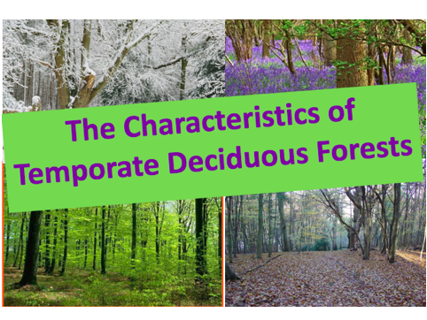 Characteristics of Temporate Deciduous Forests? Ecosystems