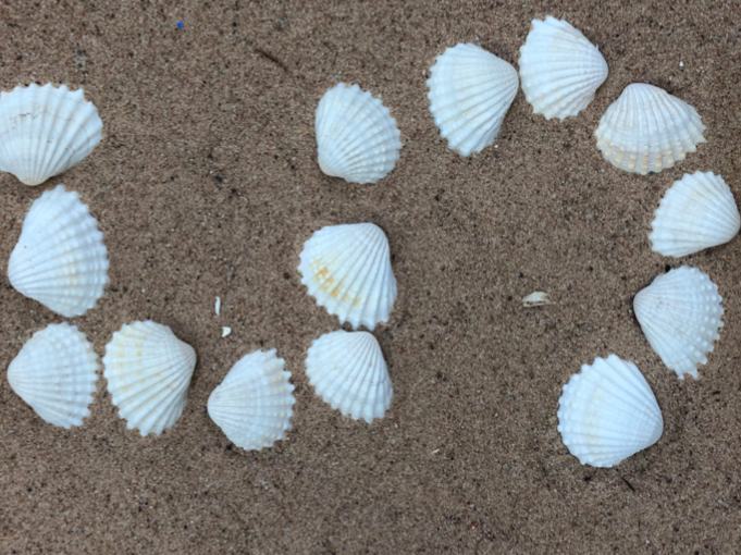 Shell Numbers and Arrays