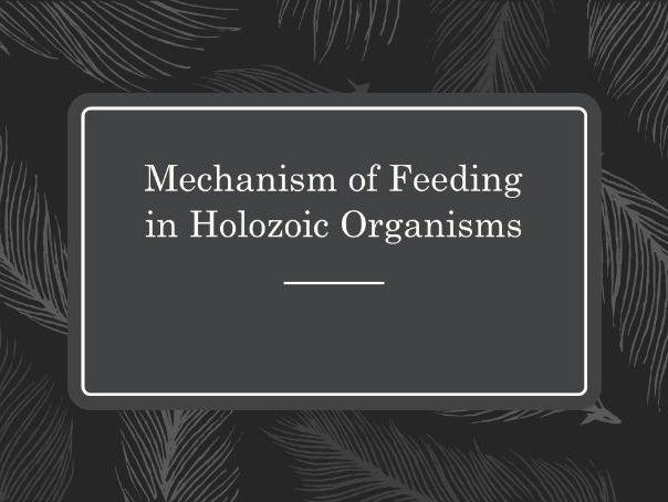 Mechanism of Feeding