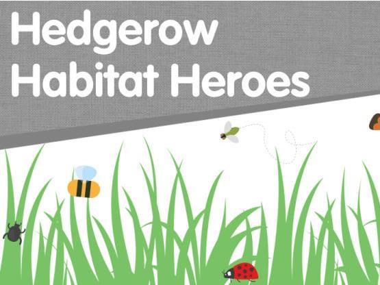 Hedgerow Habitat Heroes (Microhabitats)