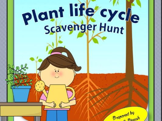 Plant Life Cycle Scavenger Hunt - An Activity