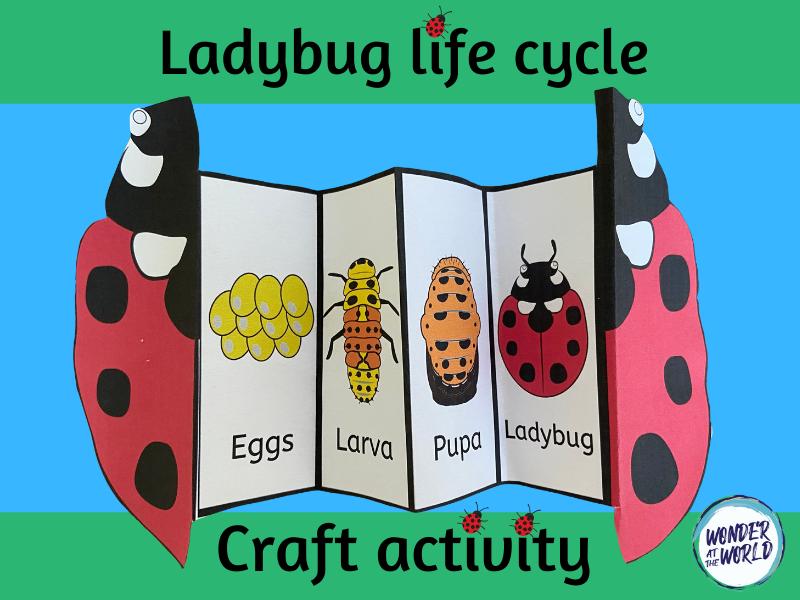 Ladybird life cycle folding craft