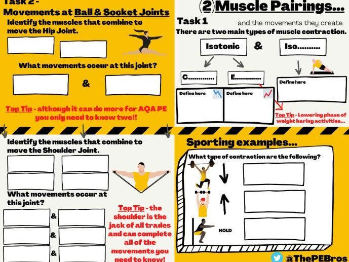 GCSE PE MusculoSkeletal Revision Tasks