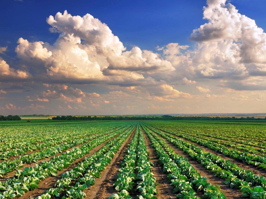 Agriculture KS3