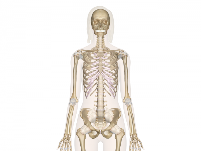 BTEC Level 3 Anatomy and Physiology by PE_Resources10 - Teaching ...