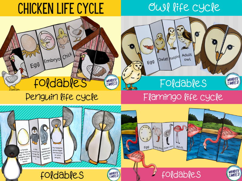 Bird life cycle foldables bundle (owl, penguin, chicken, flamingo)