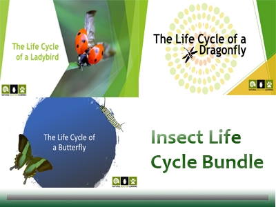 Insect Life Cycles (Butterfly, Ladybird, Dragonfly) Bundle