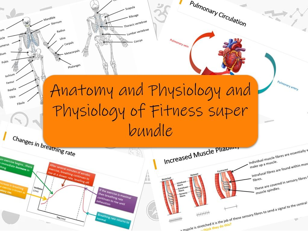 BTEC Sport L3 - Anatomy and Physiology full unit & Physiology of fitness full unit super bundle