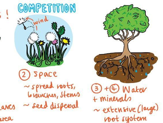 Competition and natural selection [NEW SPEC AQA]