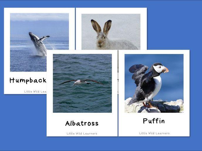 Polar picture cards Arctic Antarctica animals and environment