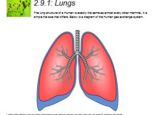 AQA GCSE Biology: Trilogy. Lesson 18 Lungs
