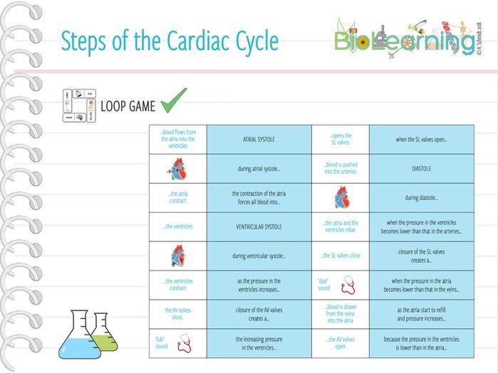 Steps of the Cardiac Cycle - Loop Game (KS5)
