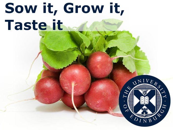 Sow it, Grow it, Taste it