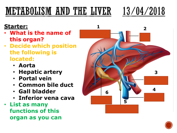 Metabolism and the liver - complete lesson (GCSE 1-9)