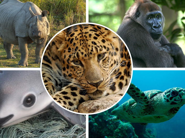Geography Endangered Animals
