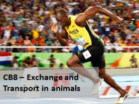 CB8 Edexcel 9-1 - Transport and exchange in animals