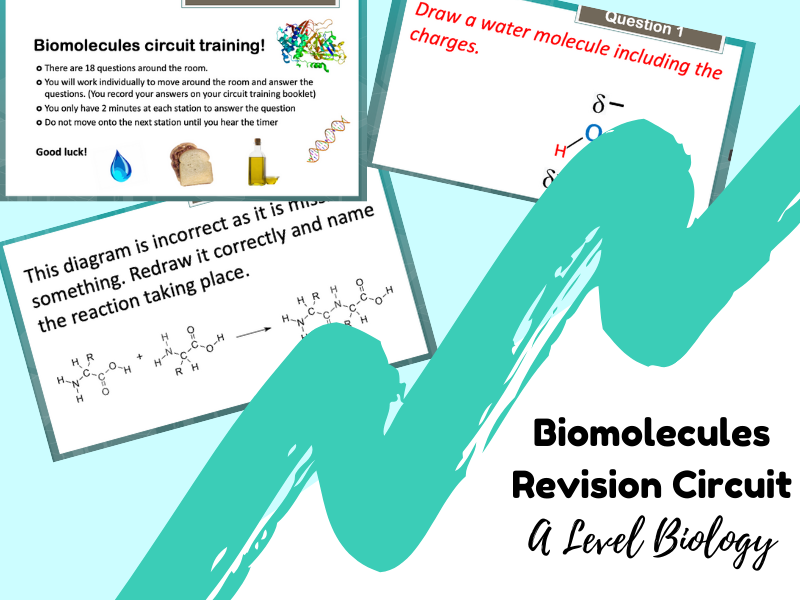 Biomolecules revision activity (Circuit training!) - A Level Biology