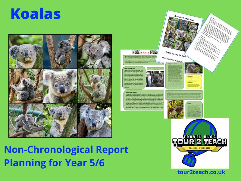 Koala Non-Chronological Report Planning for Year 5/6