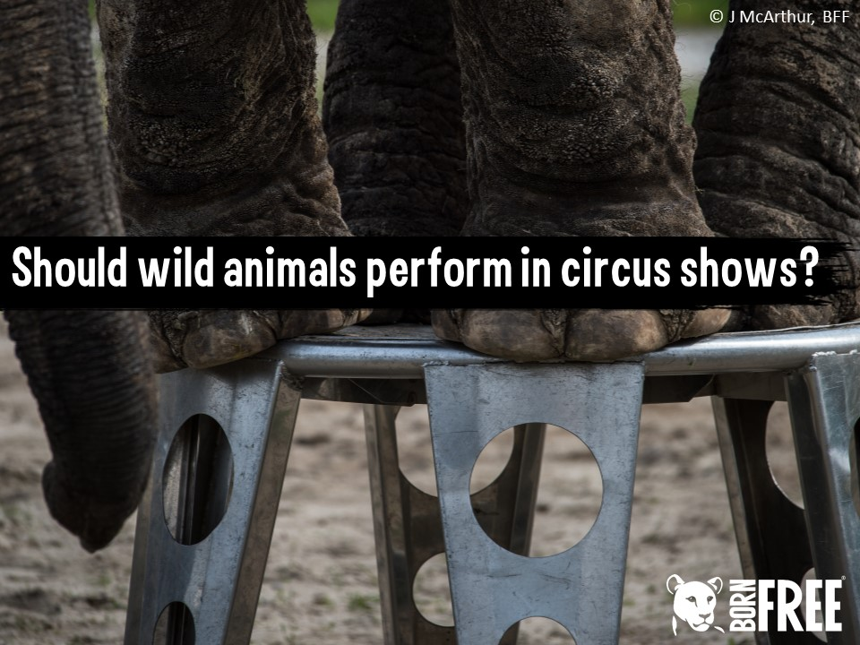 Should wild animals perform in circus shows? Short scheme of work for KS3. Born Free Foundation.