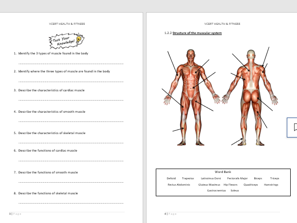 NCFE LEVEL 1/2 HEALTH & FITNESS UNIT 1.2 MUSCULAR SYSTEM PUPIL WORKBOOK