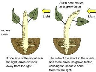 Coordination in Plants and Animals