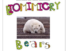 STEM Biomimicry for Young Children - Bears