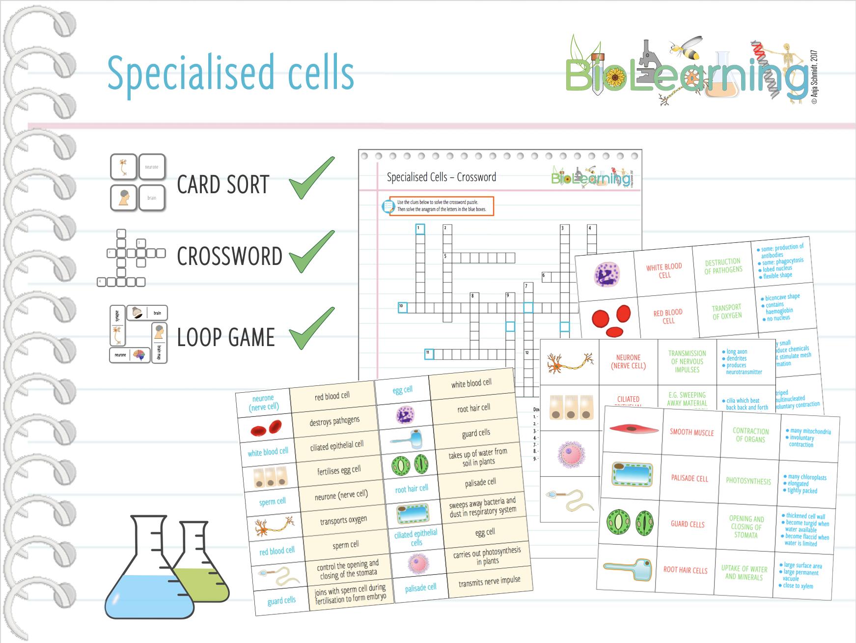 Specialised Cells - 3x Activities (KS3/KS4)