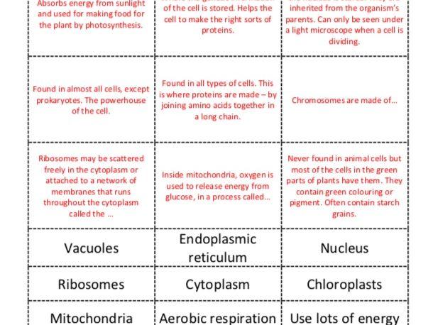 GCSE Biology Revision Cells Matching Activity Cambridge