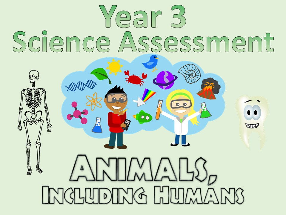 Year 3 Science Assessment: Animals, Including Humans