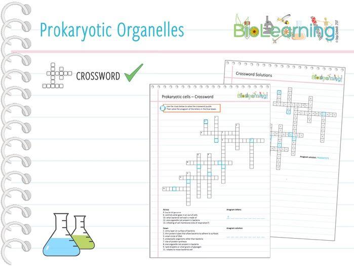 Prokaryotic Organelles - Crossword (KS5)