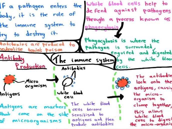 Infection And Response Mind Maps GCSE 9-1 Biology