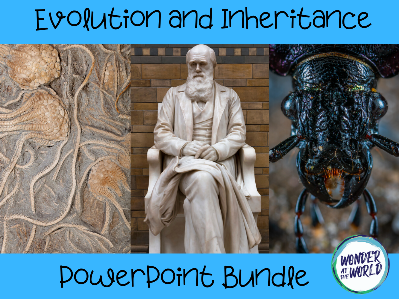 Year 6 evolution and inheritance PowerPoint bundle