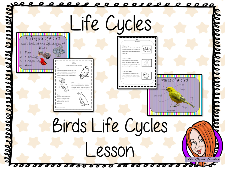 Bird  Life Cycles   -  Complete Science Lesson