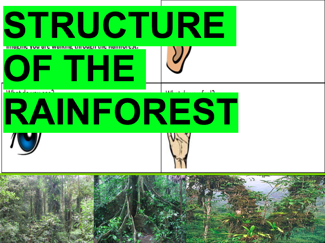 Structure of The Rainforest! Ecosystems