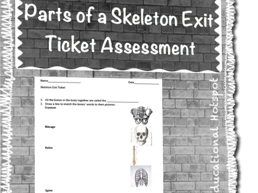 Parts of a Skeleton Exit Ticket Assessment